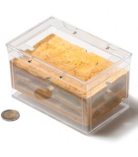 Pack fourmilière Dryness + Lasius Niger