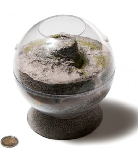 Ants Spheria Scotland