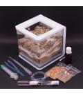 Pack Essentiel fourmilière Ants Garden + Messor Barbarus