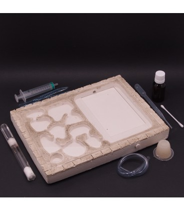 Pack all in 1: Ants Pad Terra + Lasius emarginatus