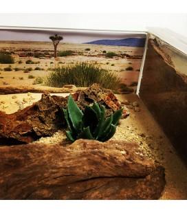 Fourmilière Namibia Prémium