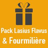 pack fourmiliere lasius flavus