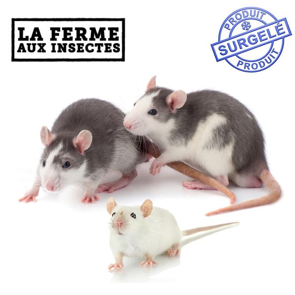 rongeurs surgeles pour les serpents rat et souris